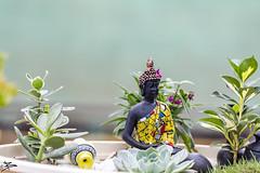 Budha (briejeshpatel) Tags: brijesh patel briejeshpatel karnataka flowershowaugust152016 macro flowers canon 7dcanon l lens dslrcanon 100mm f28l bangalore lalbagh flower show2016 f28 macrophotography macrography