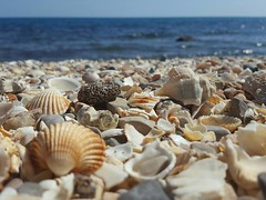 14192135_10208215649521256_293595023249360946_n (gisellacerutti) Tags: shells sea conchiglie summer mare houses blue white beach sun spiaggia sole estate spagna peniscola espana spain shell animals gusci
