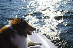dog in paradise <3 (brul10172) Tags: nature ciel sky water eau ocean lake mer lac blue bleu dog dogs chien chiens colley cute clouds nuages relax paisible penser thinking boat waves vagues wave