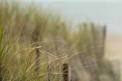One  last day at the beach (hey ~ it's me lea) Tags: hff dunes beachgrass fence happyfencefriday lakehuron ontario grandbend firstdayoffall