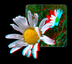 Hoverfly on Daisy - Anaglyph 3D (DarkOnus) Tags: pennsylvania buckscounty huawei mate8 cell phone 3d stereogram stereography stereo darkonus closeup macro insect fly hoverfly daisy daisies ttw oob oof anaglyph