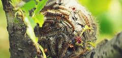Reminders of Spring (Jon-F, themachine) Tags: jonfu 2016 olympus omd em5markii em5ii em5mkii em5mk2 em5mark2  mirrorless mirrorlesscamera microfourthirds micro43 m43 mft ft     snapseed japan  nihon nippon   japn  japo xapn asia  asian fareast orient oriental aichi   chubu chuubu   nagoya  outdoors  nature  animal animals   fauna bug bugs