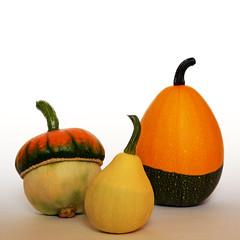 Three (M.patrik) Tags: pumpkins three colorful still life light autumn fall white garden homemade