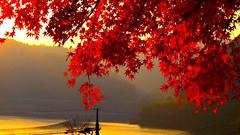 autumn (beddinginnreviews) Tags: beddinginnreviews fashion reviewsbeddinginn woman style beautiful comfortable