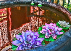 Reflections of nature Zen (digifancanon) Tags: china flowers reflection colours buddha lilies zen fareast hdr canoneos5d buddhistic ef24105mm40l