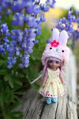 Lupines (jessi.bryan) Tags: trip flowers camping washington doll bjd wildflowers wingsinflight lalatroop sunrisewashington pukipuki pukipukilily chocopuki chocopukilily lalatroophelmet