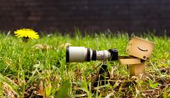 wildlife photographer (AlexTurton) Tags: macro canon toy toys photographer sigma danbo 2470 revoltech 60d canon60d danboard sigma2470mm28 alexturton alexturtonphotography