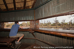 Mapungubwe National Park - South Africa (scottnramsay) Tags: africa park southafrica nationalpark wildlife conservation worldheritagesite hide national wilderness waterhole southernafrica mapungubwe mapungubwenationalpark scottramsay scottnramsay