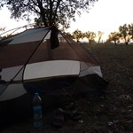 """This is the pear orchard I slept in last night (at sunrise this morning) <a style=""""margin-left:10px; font-size:0.8em;"""" href=""""http://www.flickr.com/photos/59134591@N00/8094391296/"""" target=""""_blank"""">@flickr</a>"""