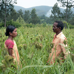 The farmers (- Francois Pe -) Tags: india film field mediumformat couple kodak hasselblad valley farmer agriculture portra araku livelihoods oraganic adivasi naandi