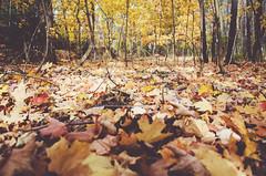(winstonelliott) Tags: street wood autumn light tree fall colors leaves stairs nikon october natural foliage stump existing d5100