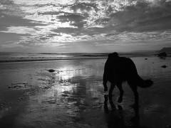 A World of Adventures (baacharu) Tags: california sunset bw beach dogs santabarbara us blackwhite unitedstates x10 hendrysbeach fujix10