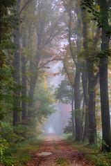 Autumn walk in the foggy forest! (radonracer) Tags: nebel digiart wald blätter boeckelt radonart