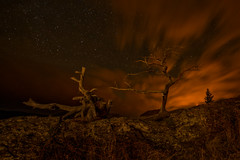 Burmis Tree Under Starry Skies (James.Ireland) Tags: wood old trees sky canada tree night clouds stars star moss nikon rocks iso400 pass headlights alberta crowsnest crowsnestpass d800 petrified burmistree burmis