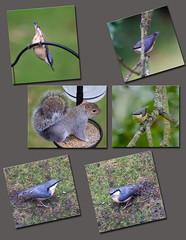 Points of view (forest star) Tags: bird squirrel birdfeeder nuthatch