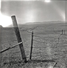 Keep Gate Closed (JimShootsFilm) Tags: blackandwhite 120 film field america fence mediumformat square highway gate montana unitedstates lightleak lightleaks squareformat barbedwire prairie agriculture plains prairies kiev ilford barbedwirefence lewisandclark kiev88 lewisandclarktrail ilforddelta sovietcamera hasselbladski filmfilmforever bwfp