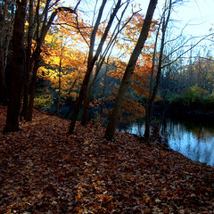 sunlit (Mustekala5) Tags: morning autumn orange tree fall mill leaves backlight river square landscape am glow outdoor tokina format sunlit natute 1012mm nikond5000 tobrian