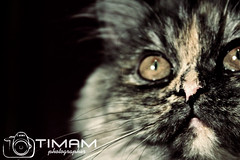 """IMG_7369 (""""Timam"""") Tags:"""