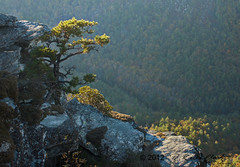Afternoon View into the Linville Gorge (R. Keith Clontz) Tags: sunlight northcarolina blueridgemountains linvillegorge afternoonsunlight appalachianmountains northcarolinamountains craggytree mossyrocks tablemountainpine linvilleriver naturalbonsai rkeithclontz blueridgepics blueridgelight