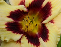 What we achieve inwardly, will change our outer reality. (careth@2012) Tags: lily doublefantasy amazingnature floralfantasy perfectpetals nikonfrance awesomeblossoms theeliteofflickrsawesomeblossoms flickrflorescloseupmacros ohnonotanotherflower amazingdetails passionforflowers unforgettableflowers weloveallflowers silveramazingdetails thebestofweloveallflowers livingjewelsofnature flickrstruereflection1 flickrstruereflectionlevel1 chariotsofnaturelevel1 suzysflowersgallery passionforflowerslevel3 passionforflowerslevel4 passionforflowerlevel2 passionforflowerslevel5