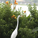 Birding and Lake Activities in Polk County, Central Florida