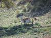 Texas Whitetail Hunt & Exotics - Kerrville 26