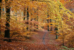 A walk in the beautiful autumn forest (Ingrid0804) Tags: wood autumn trees fall forest denmark path abigfave