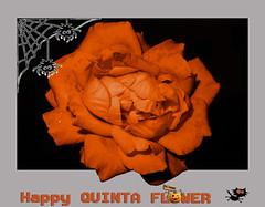 El jueves es el dia de las flres en flickr .**.  .**. (jacilluch) Tags: autumn orange flower macro fall halloween fleur rose pumpkin scary jackolantern flor blossoms rosa spooky otoo naranja 1031 todoslossantos trickortreating susto nochedemuertos nochedebrujas 3110 spookyfun 31deoctubre trucootrato escalofriantediversin