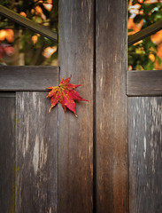 DOOR OF AUTUMN (ajpscs) Tags: autumn leaves japan japanese tokyo japanesegarden maple nikon  nippon   tochigi  d300  nikk ajpscs  shyen rinnjitemple doorofautumn shyengarden