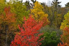 Road to Toronto Trees (pokoroto) Tags: road autumn trees toronto ontario canada october 2012 10    kannazuki   themonthwhentherearenogods 24