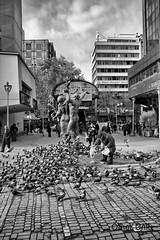 Old man and pigeons (Ömer Ünlü) Tags: turkey pigeon türkiye feed ankara sakarya ömerünlü