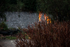 The Burning Bush (me'nthedogs) Tags: reflection fire bush burning burningbush