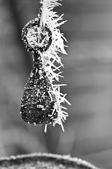 Icy Tendrils (Nomadic-Imagery) Tags: blackandwhite macro ice monochrome frozen dof freezing depthoffield iced weight lever weighingscales canoneos50d 12mmkenkoextensiontube canon70200mmf4lislens