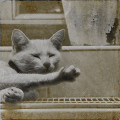 kthetage (sommerpfuetze) Tags: texture animal sepia cat square mono katze whitecat wellness petrait kthe mieze krallen tatze thelittledoglaughed rkeln wintertage schnurrrr genieser ktherakete ldlnoir