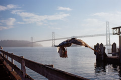 Jump (a l e x . k) Tags: morning building film ferry san francisco pentax action seagull lx fa43mmf19