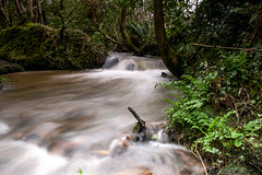 Untitled_Panorama1 (mullion2010) Tags: fern tree nature water river moss cornwall flowing