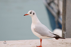 Sea life (A.saraflorence) Tags: life city blue light sea sky italy color bird art love nature colors beautiful birds animal canon fun photography photo europe artist day photos expression seagull dream passion instant marche senigallia intensity