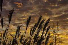 Midwestern Glory (Morrow Cove Photographics) Tags: illinois colchester sunrise ranch tree reeds sky clouds canon canoneos60d 60d lightroom lightroom4 orange purpole blue horizon thanksgiving morning dawn landscape photographer mcdonough mcdonoughcounty photo photograph picture image photography beautiful