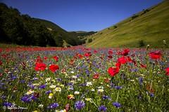 Val Canatra (BIO_MA Roberto Perucci) Tags: sibillini parconazionale fioritura landscape colori