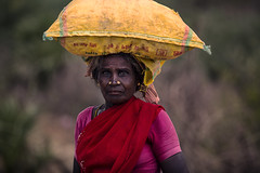 India (Enricodot ) Tags: enricodot india color colors red woman women worker job yellow