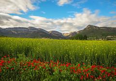 Vilanova de Mei, Montsec (efe Marimon) Tags: canonpowershots120 felixmarimon catalunya lleida lanoguera montsec vilanovademei amapolas primavera