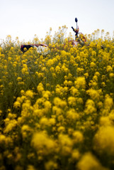 L1008471c (haru__q) Tags: leica m8 leitz summicron field mustard  honda crm250r motorcycle 2st