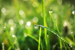 catching the morning light... (ggcphoto) Tags: morning light bokeh nature circles green day sunlight droplets mist water closeup macro happy