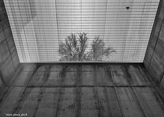 Palm Tree Through the Grate (that_damn_duck) Tags: blackandwhite monochrome pointofview depthofview walls lines underground palmtree bw blackwhite