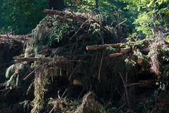 ckuchem-8354 (christine_kuchem) Tags: abholzung baum baumstmme bume einschlag fichten holzeinschlag holzwirtschaft stapel wald waldwirtschaft ste