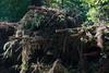 ckuchem-8354 (christine_kuchem) Tags: abholzung baum baumstämme bäume einschlag fichten holzeinschlag holzwirtschaft stapel wald waldwirtschaft äste