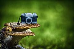 FungiFilm (flashfix) Tags: september232016 2016 2016inphotos nikond7000 nikon ottawa ontario canada 55mm300mm camera mushroom bokeh nature mothernature fungi macro stacked prop