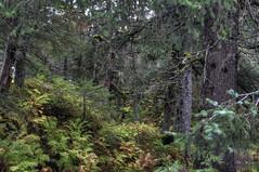 20160918_05 (tpeters2600) Tags: alaska autumn fall autumninalaska canon eos7d hdr photomatix tamronaf18270mmf3563diiivcldasphericalif outdoors scenery landscape