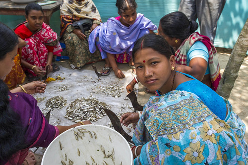 Women dry small fish in Bangladesh. Photo by Finn Thilsted, 2012.