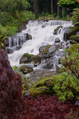 -6961 (rlcjr) Tags: alaska forest waterfall tongass